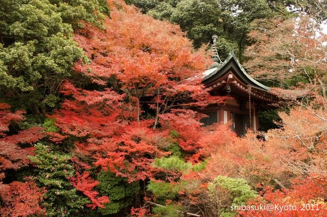 20111202_Kyoto-63_毘沙門堂_1.JPG