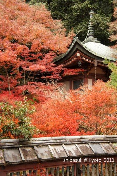 20111202_Kyoto-69_毘沙門堂_1.JPG