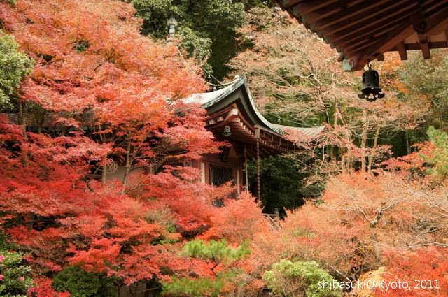 20111202_Kyoto-72_毘沙門堂_1.JPG