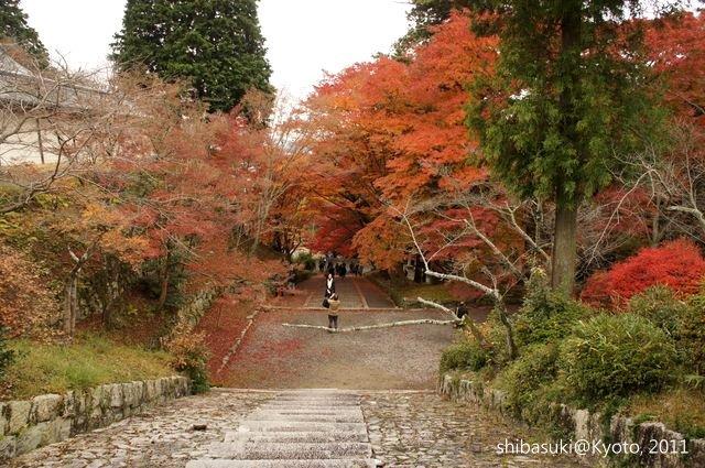 20111202_Kyoto-84_毘沙門堂_1.JPG