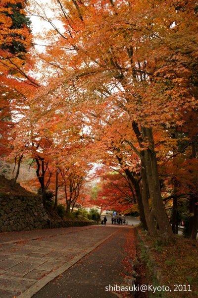 20111202_Kyoto-90_毘沙門堂_1.JPG