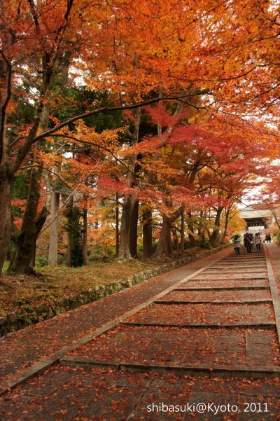 20111202_Kyoto-96_毘沙門堂_1.JPG
