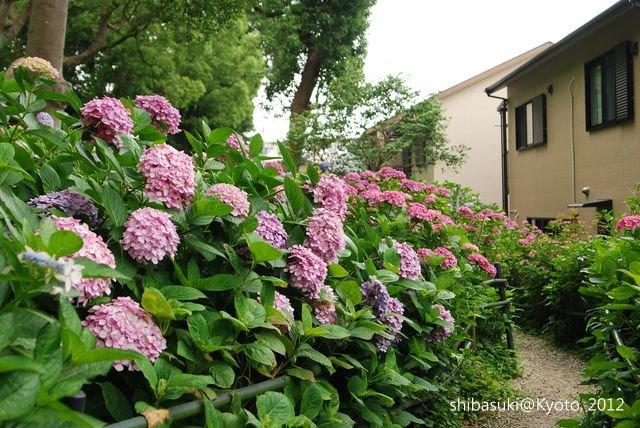 20120628_Kyoto-134_藤森神社_1