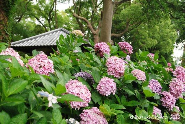 20120628_Kyoto-138_藤森神社_1