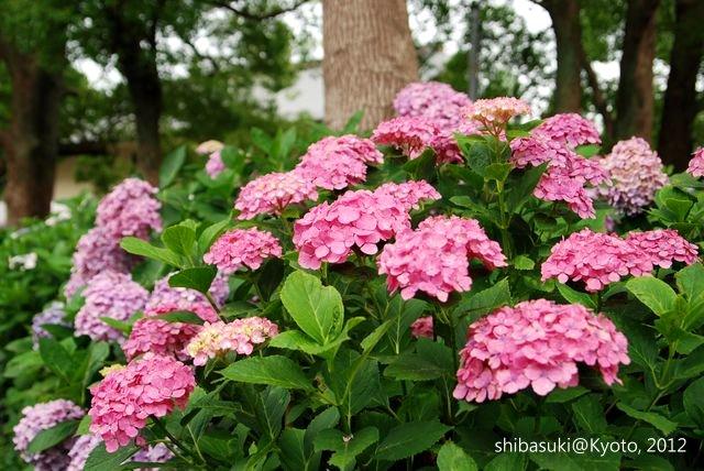 20120628_Kyoto-141_藤森神社_1