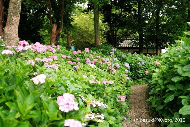 20120628_Kyoto-150_藤森神社_1