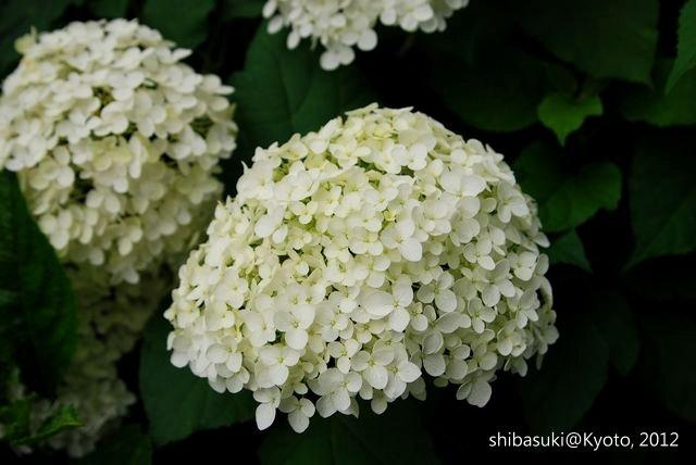 20120628_Kyoto-153_藤森神社_1