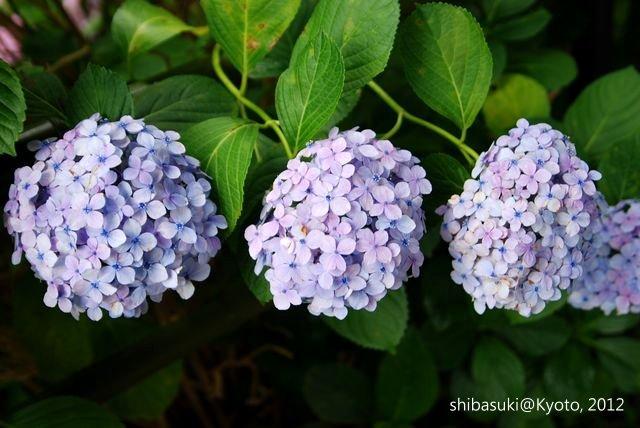 20120628_Kyoto-158_藤森神社_1