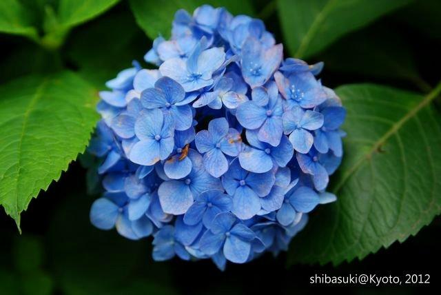 20120628_Kyoto-159_藤森神社_1