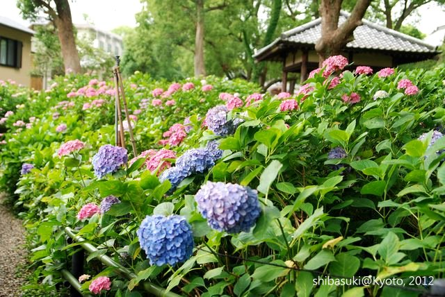 20120628_Kyoto-160_藤森神社_1