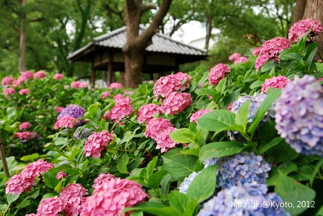 20120628_Kyoto-162_藤森神社_1