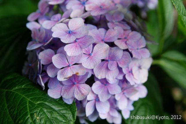 20120628_Kyoto-164_藤森神社_1