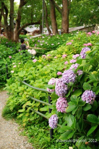 20120628_Kyoto-165_藤森神社_1