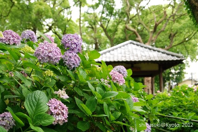 20120628_Kyoto-167_藤森神社_1