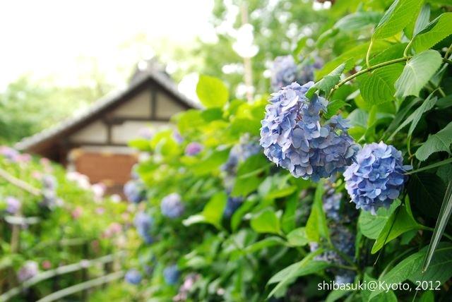 20120628_Kyoto-179_藤森神社_1