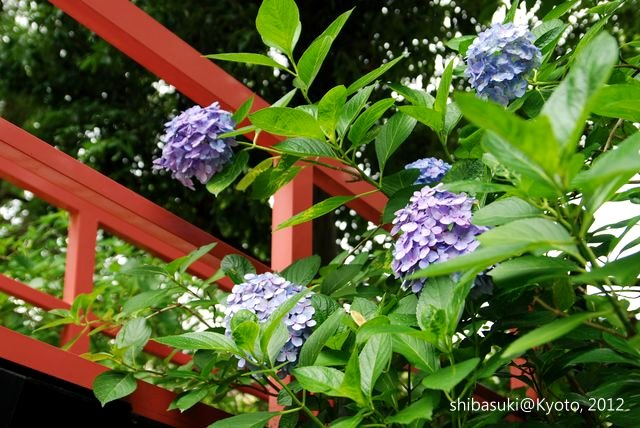 20120628_Kyoto-201_藤森神社_1