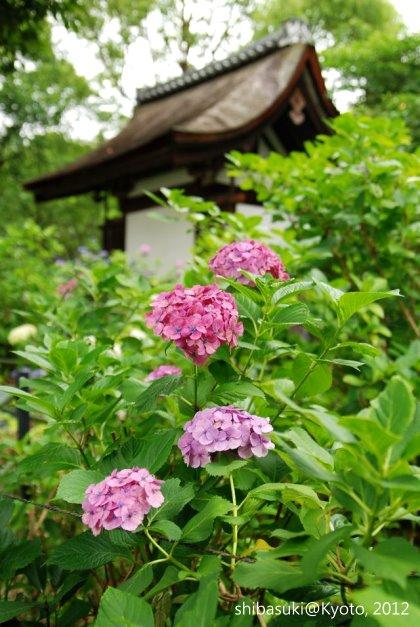 20120628_Kyoto-202_藤森神社_1
