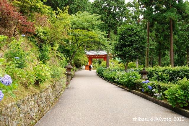 20120628_Kyoto-207_三室戶寺_1