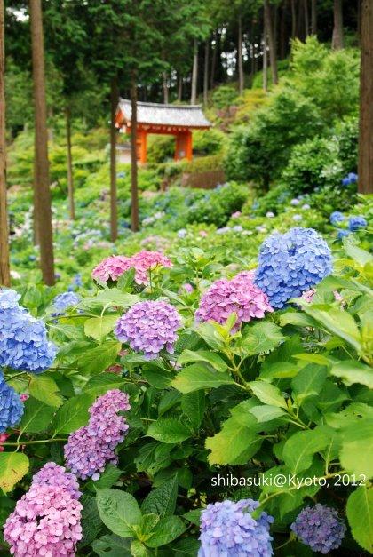 20120628_Kyoto-219_三室戶寺_1