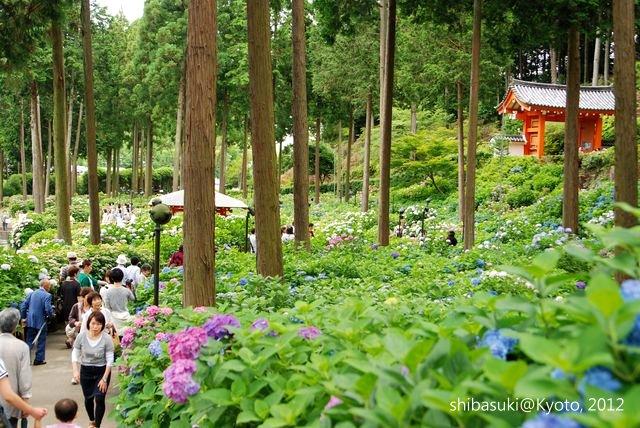 20120628_Kyoto-235_三室戶寺_1