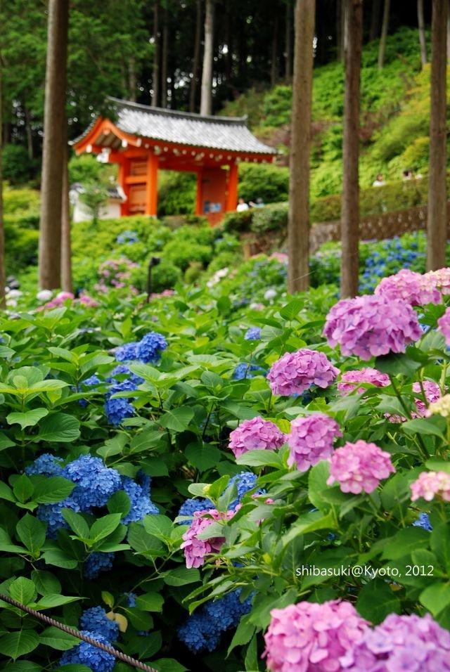 20120628_Kyoto-242_三室戶寺_1