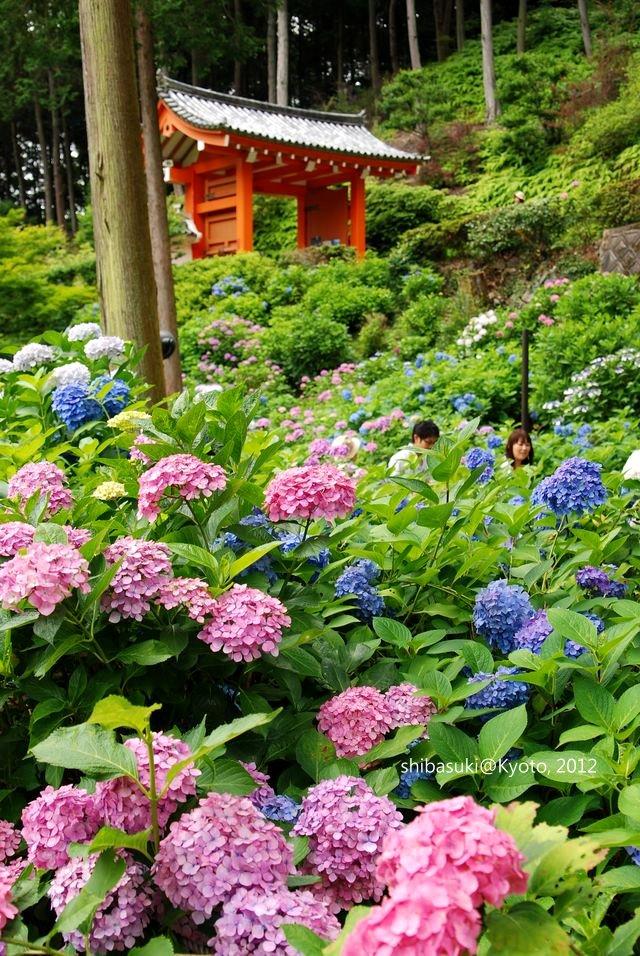 20120628_Kyoto-258_三室戶寺_1
