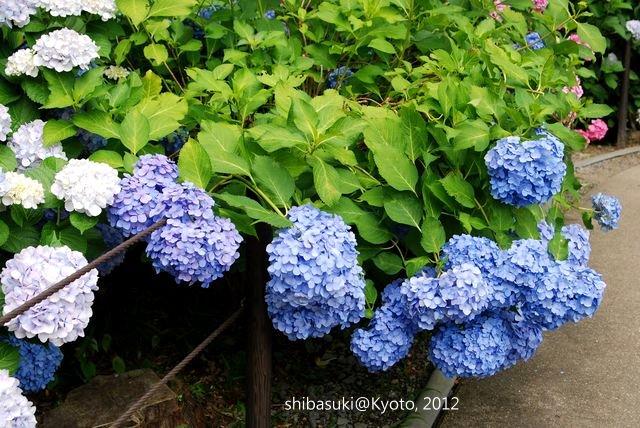 20120628_Kyoto-265_三室戶寺_1