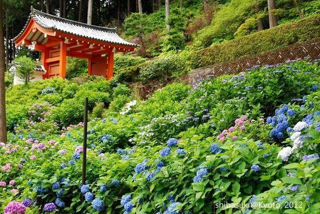 20120628_Kyoto-266_三室戶寺_1