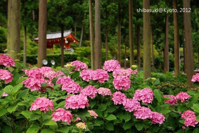 20120628_Kyoto-312_三室戶寺_1