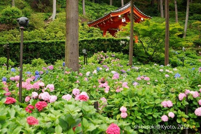 20120628_Kyoto-318_三室戶寺_1