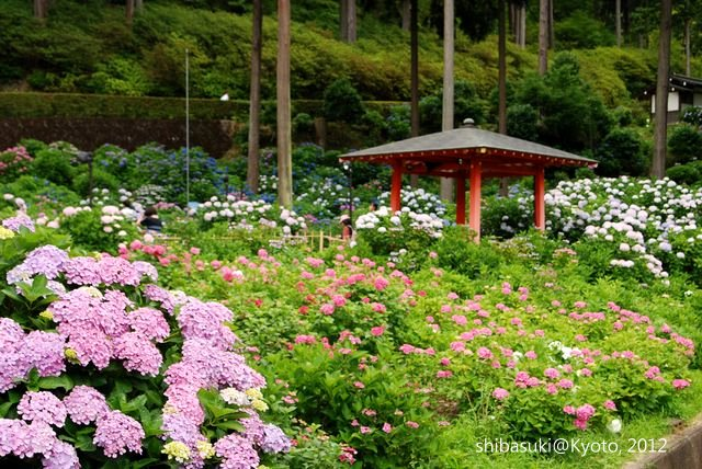 20120628_Kyoto-331_三室戶寺_1