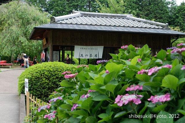 20120628_Kyoto-335_三室戶寺_1