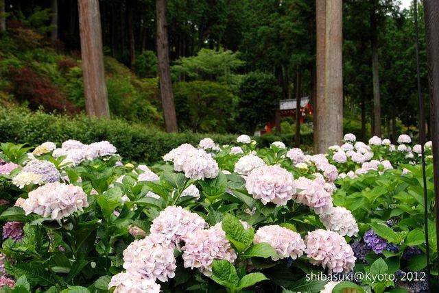 20120628_Kyoto-338_三室戶寺_1