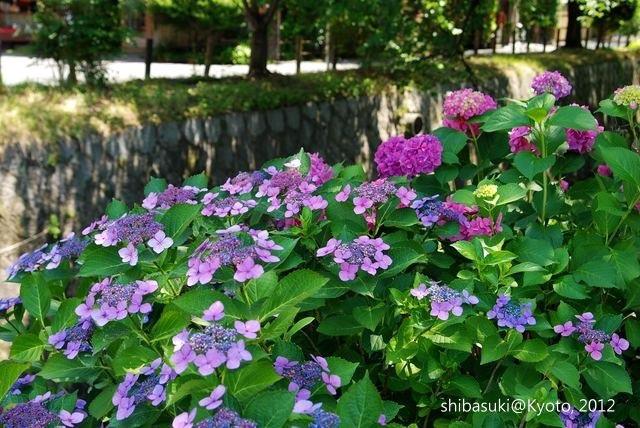 20120629_Kyoto-1_哲學之道_1.JPG