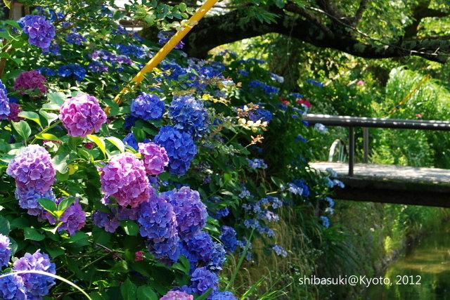 20120629_Kyoto-10_哲學之道_11.jpg