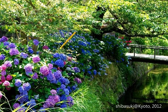 20120629_Kyoto-8_哲學之道_1.JPG