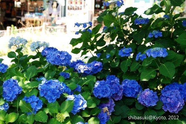 20120629_Kyoto-17_哲學之道_1.JPG
