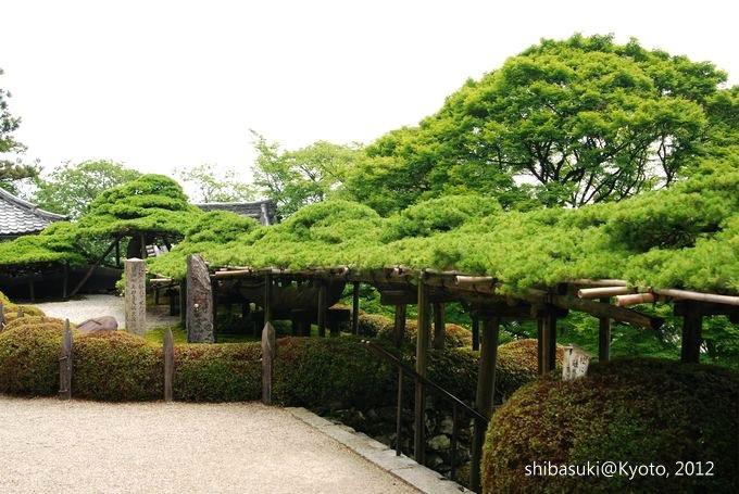20120630_Kyoto-36_善峰寺_1.JPG