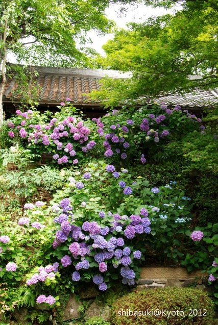 20120630_Kyoto-38_善峰寺_1.JPG