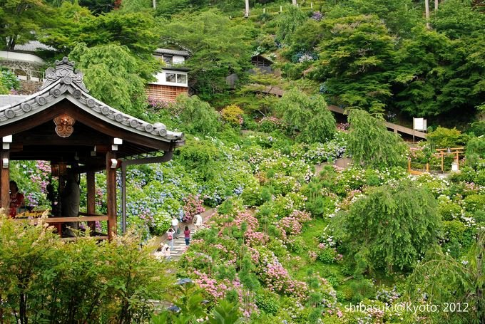 20120630_Kyoto-47_善峰寺_1.JPG