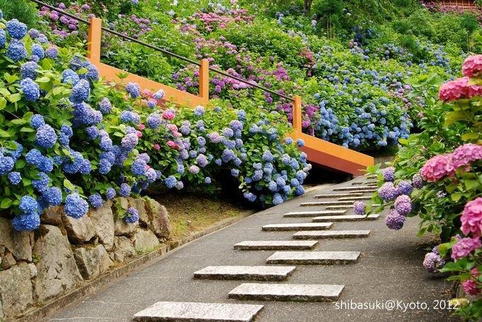 20120630_Kyoto-174_善峰寺_1.JPG