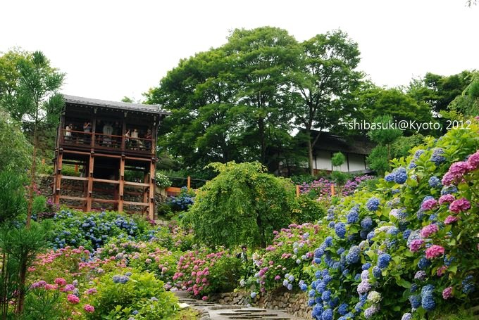 20120630_Kyoto-230_善峰寺_1.JPG