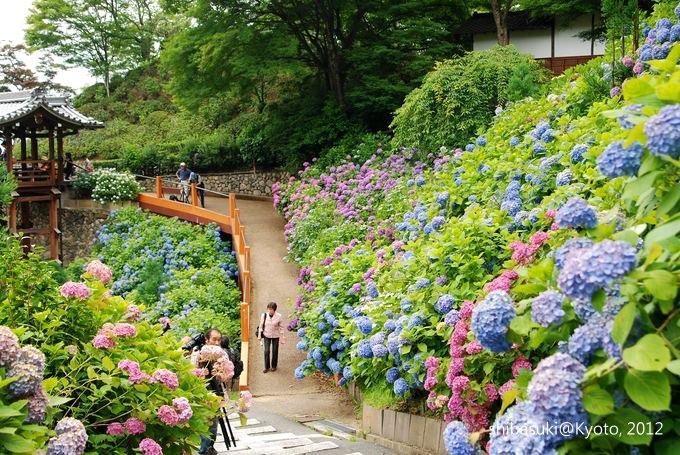 20120630_Kyoto-244_善峰寺_1.JPG