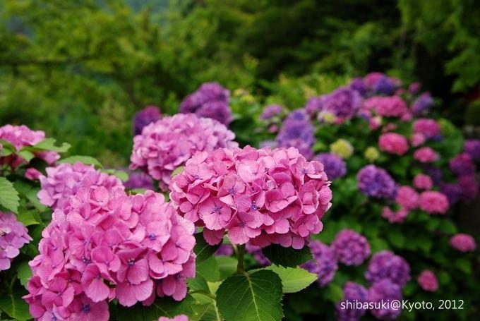 20120630_Kyoto-281_善峰寺_1.JPG