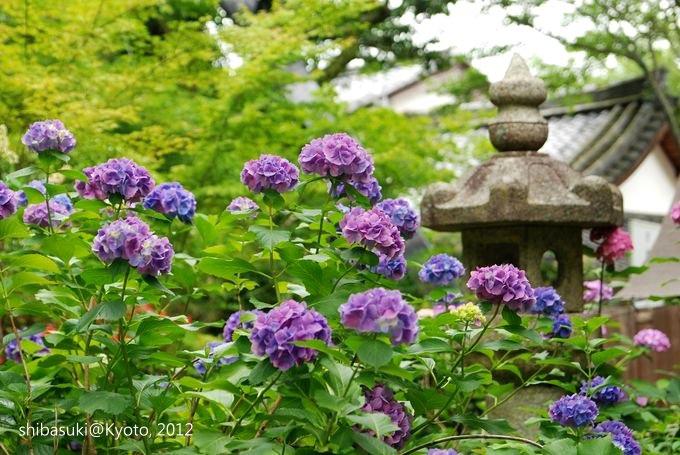 20120630_Kyoto-290_善峰寺_1.JPG