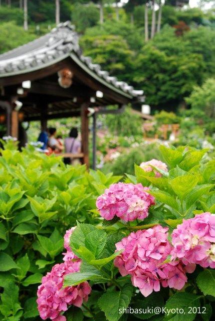20120630_Kyoto-294_善峰寺_1.JPG