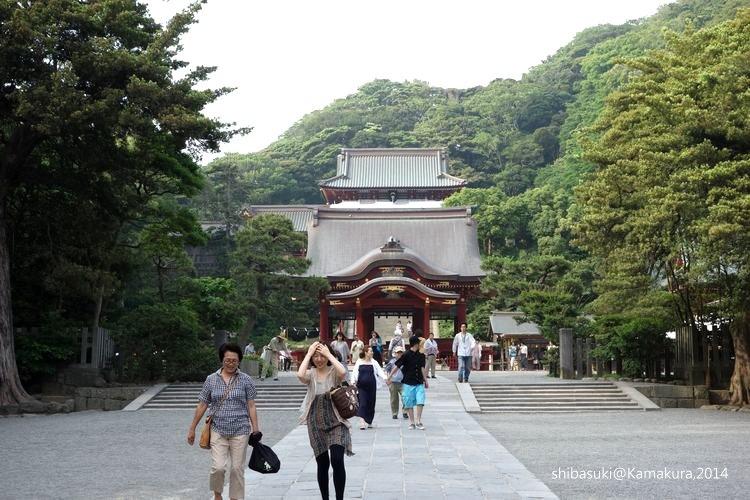 20140616_Kamakura-178_鶴岡八幡宮_1.JPG