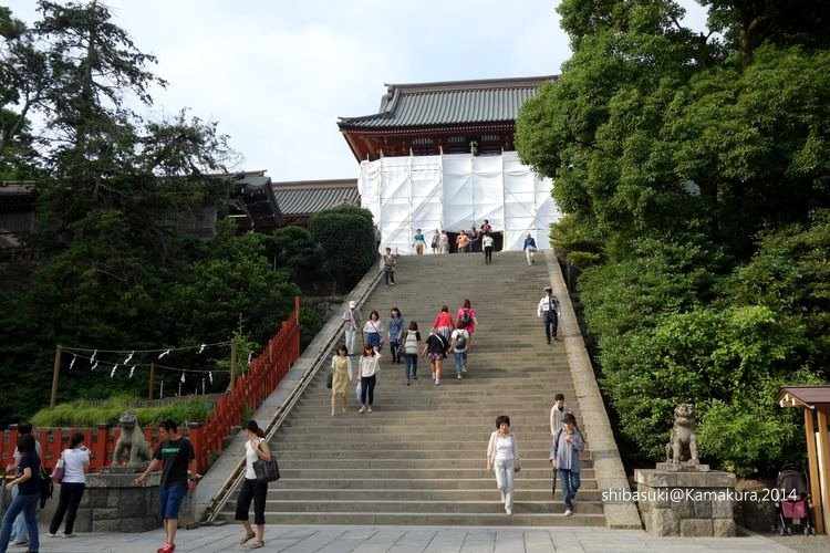 20140616_Kamakura-182_鶴岡八幡宮_1.JPG