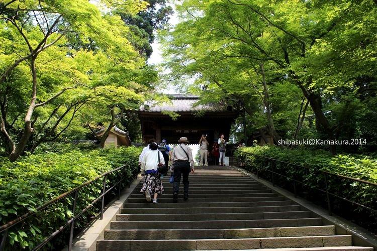 20140616_Kamakura-12_圓覺寺_1.JPG