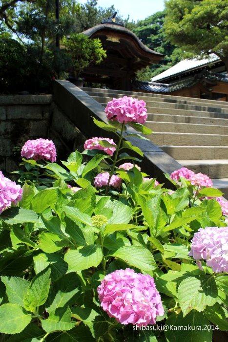 20140616_Kamakura-18_圓覺寺_1.JPG